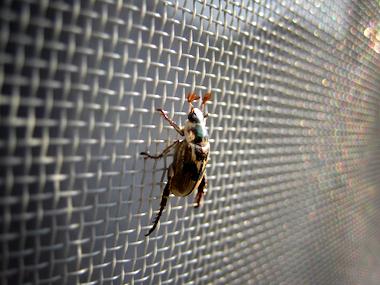 網戸にいた虫