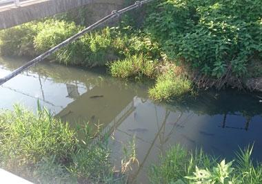 魚の泳ぐ川